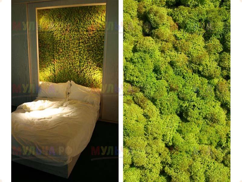 Мох для декора, цветной - мох лесной, болотный - купить у пр.