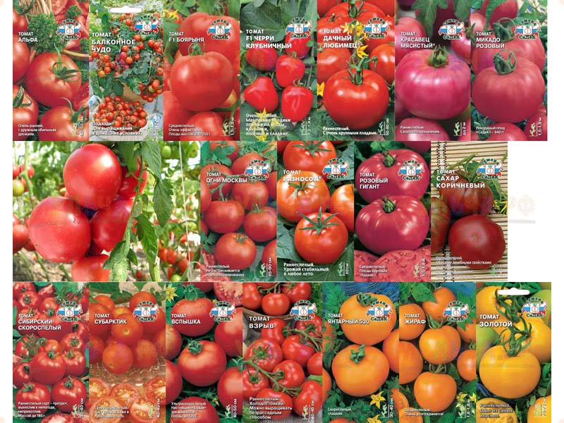 Семена СеДеК томат Мажор F1 (0,05 г) з/г (код 15838)